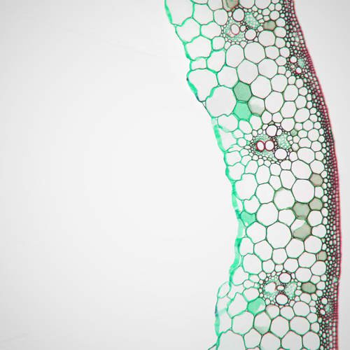 about-our-science-vascular-bundles.jpg
